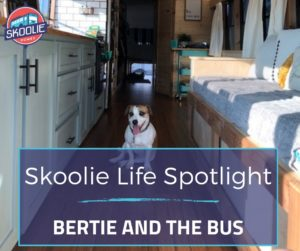 Bertie and the Bus
